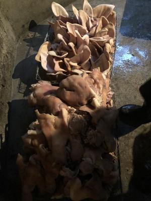 贵州省遵义市汇川区猪头肉 生肉