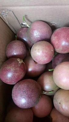 广西壮族自治区玉林市容县紫色百香果 50 - 60克