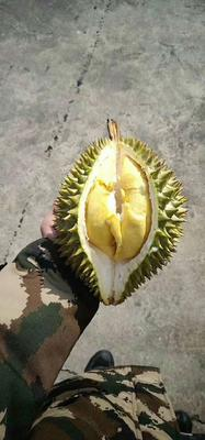 广西壮族自治区崇左市凭祥市干荛榴莲 2公斤以下 30 - 40%以上