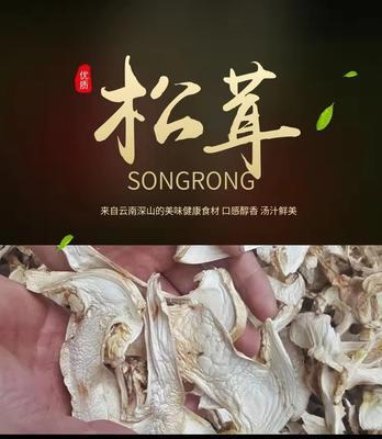 云南省迪庆藏族自治州香格里拉县干松茸 散装 1年以上