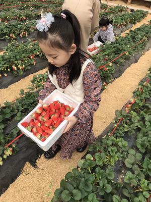 山东省滨州市阳信县甜宝草莓 30克以上