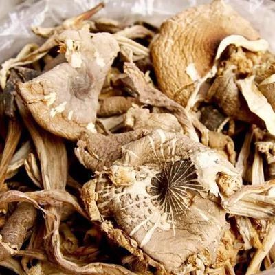 云南省迪庆藏族自治州德钦县干鸡枞菌 散装 1年以上