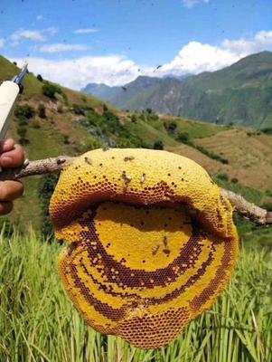 云南省西双版纳傣族自治州勐腊县土蜂蜜 散装 2年以上 100%