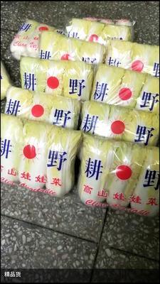 湖北省襄阳市宜城市小娃娃菜 2~3两以上
