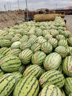 广东省东莞市东莞市甜王西瓜 4斤打底 7成熟 2茬以上 有籽