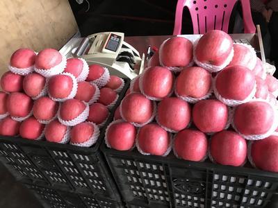 广东省东莞市东莞市红富士苹果 70mm以上 统货 纸+膜袋