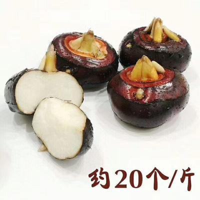 广西壮族自治区桂林市平乐县荔浦马蹄 中号