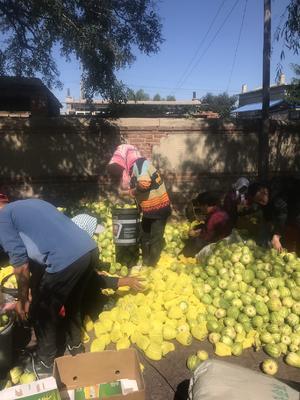 辽宁省锦州市凌海市花姑娘甜瓜 0.5斤以上