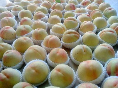 江苏省无锡市滨湖区阳山水蜜桃 55mm以上 4两以上