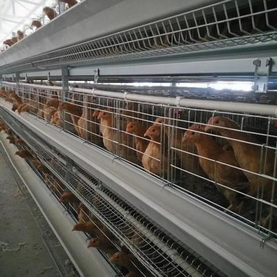 河南省驻马店市西平县鸡笼 厂价直销小层叠蛋鸡笼