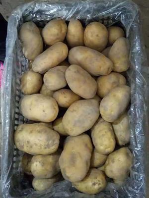 新疆维吾尔自治区阿克苏地区阿克苏市荷兰15号土豆 3两以上