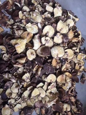 陕西省汉中市洋县椴木菇 散装 1年