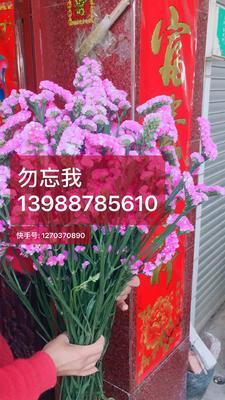 云南省昆明市呈贡区勿忘我