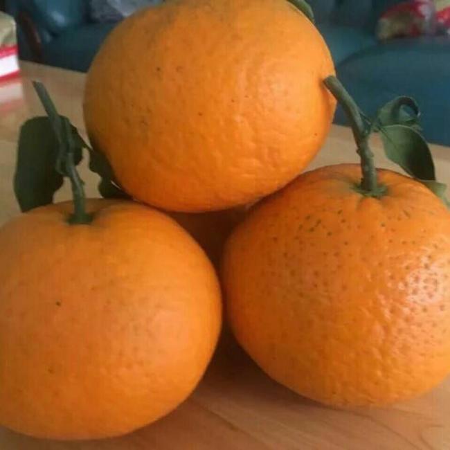 青见柑桔 3 - 3.5cm 4两以上  约9.0斤/箱