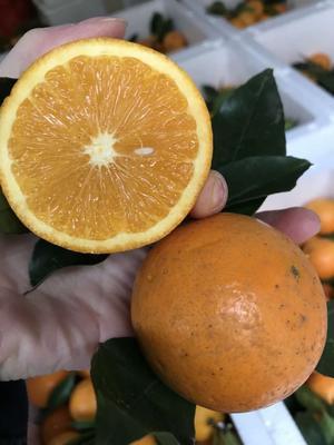 广西壮族自治区南宁市西乡塘区麻阳冰糖橙 4两以下 85-90mm