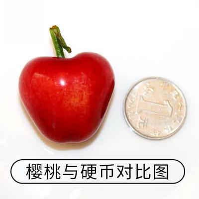 辽宁省大连市瓦房店市美早樱桃 12-15g 30mm以上
