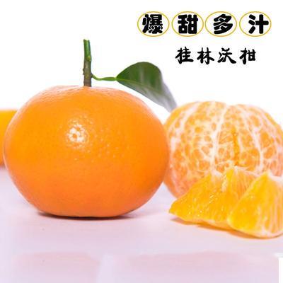 广西壮族自治区桂林市平乐县沃柑 7 - 7.5cm 3两以上