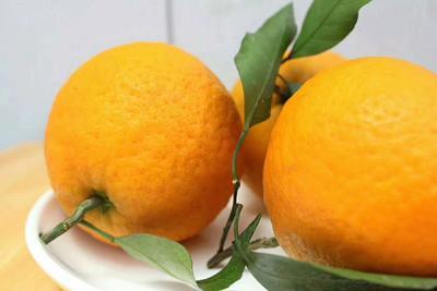 这是一张关于青见柑桔 3 - 3.5cm 4两以上 的产品图片