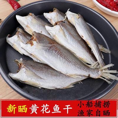 山东省日照市岚山区小黄鱼 野生 1.5-2.5公斤