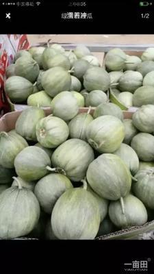 这是一张关于绿宝甜瓜 0.3斤以上 的产品图片