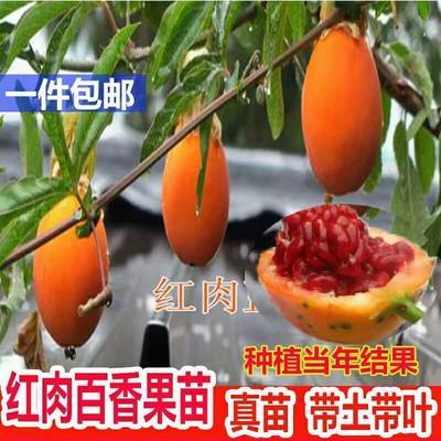 这是一张关于云尼香拿百香果苗 的产品图片