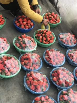 江苏省徐州市贾汪区宁玉草莓 30克以上