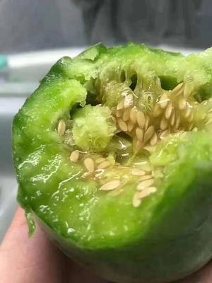 这是一张关于绿宝甜瓜 1.5斤以上 的产品图片