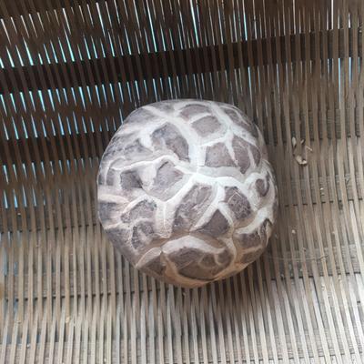 河南省驻马店市泌阳县普通干香菇 1年以上 散装