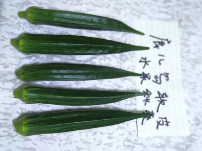 广东省广州市白云区水果秋葵 10 - 12cm