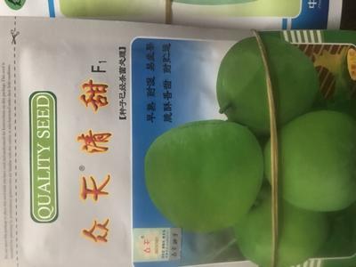 河南省驻马店市泌阳县绿宝石甜瓜种子 亲本(大田用种) ≥90%