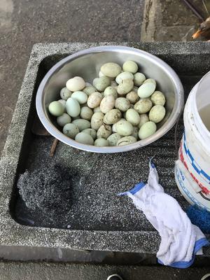 浙江省温州市乐清市农家咸鸭蛋 散装