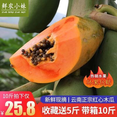 云南省红河哈尼族彝族自治州个旧市红心木瓜 一件代发10斤含箱