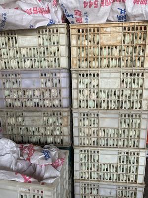 河南省信阳市浉河区白鸭蛋 食用 箱装