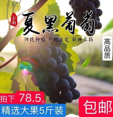 广东省广州市白云区夏黑葡萄 1-1.5斤 5%以下 1次果