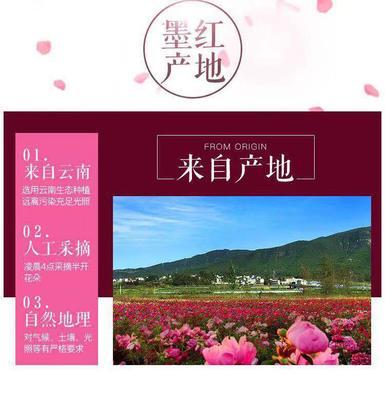 云南省昆明市官渡区墨红玫瑰