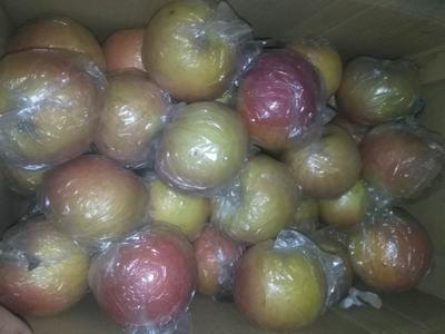 河北省衡水市枣强县红富士苹果 75mm以上 片红 膜袋