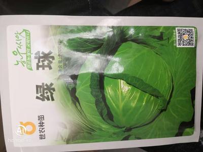 山东省日照市莒县绿甘蓝种子 ≥80% 杂交种