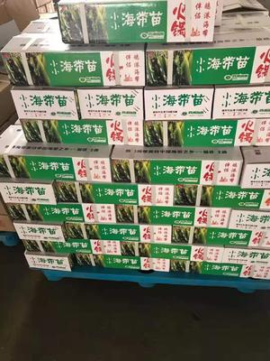 福建省宁德市霞浦县海带芽 霞浦海带苗 裙带菜 海带芽。
