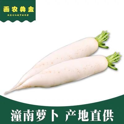 重庆潼南县白萝卜 1.5~2斤 9斤装 一件代发