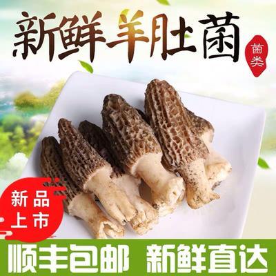 这是一张关于羊肚菌 鲜货 6cm~8cm 尖顶 灰黑色 野生 的产品图片