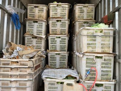 云南省昆明市呈贡区黄心大白菜 1斤以下 毛菜