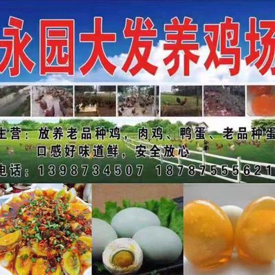 云南省保山市隆阳区盐皮蛋