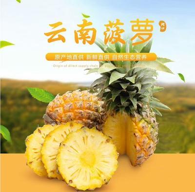 云南省昆明市东川区香水菠萝 2 - 2.5斤