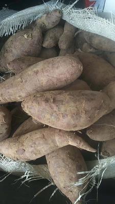 广东省揭阳市惠来县紫罗兰紫薯 3-20两