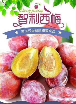 广东省广州市越秀区智利西梅 2斤J大果包邮 Dole品牌