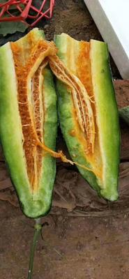 山东省临沂市蒙阴县羊角密甜瓜 0.5斤以上