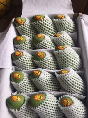 海南省三亚市吉阳区金煌芒 5两以上 三亚山地自种芒果,大量招代理