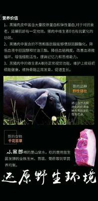 北京大兴区生态土黑毛猪 200-300斤