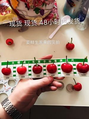 这是一张关于红灯樱桃 26-28mm 18-20g 的产品图片