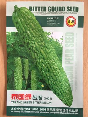 浙江省温州市文成县绿苦瓜种子 进口泰国苦瓜种早中熟高产特级
